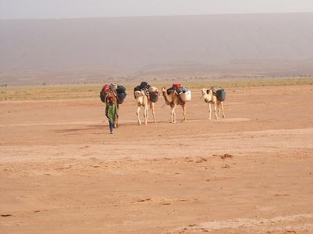 Trek Sahara - the camels