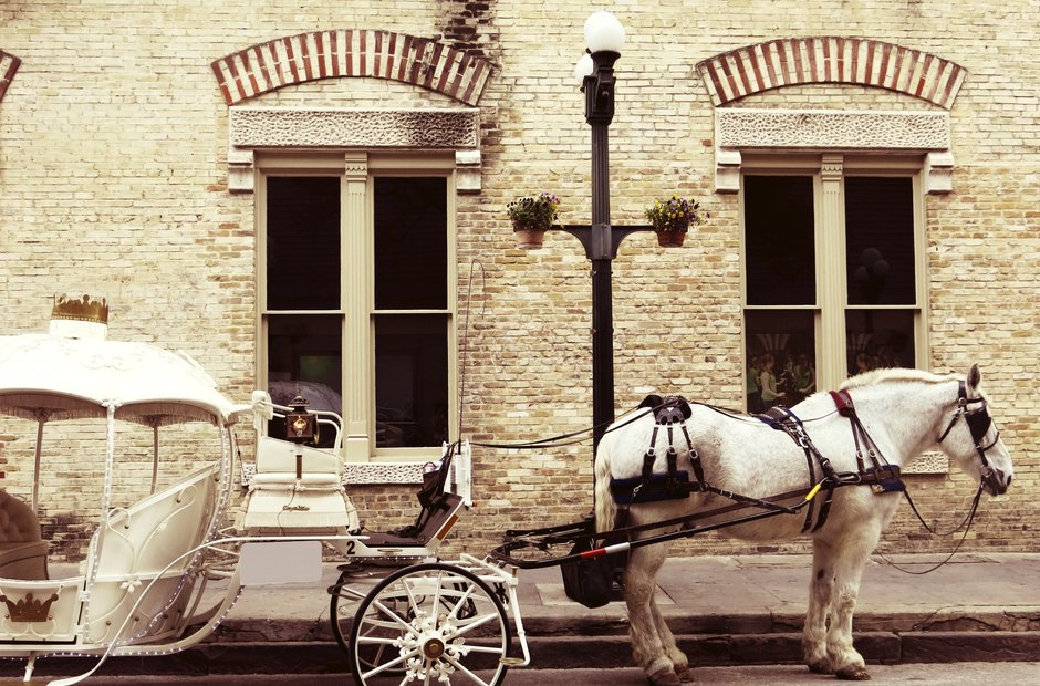 horse carriage cinderella