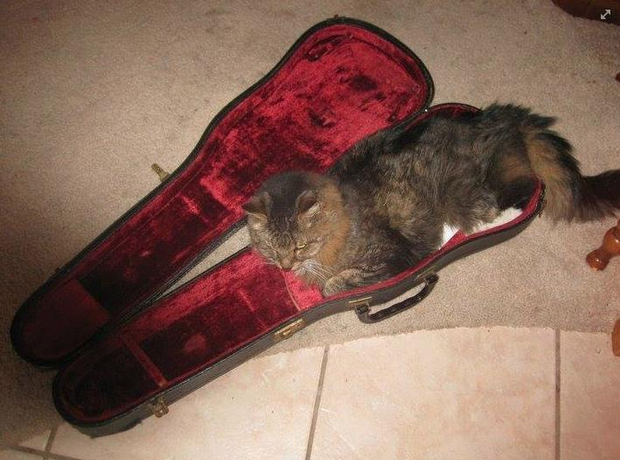 animals in instrument cases