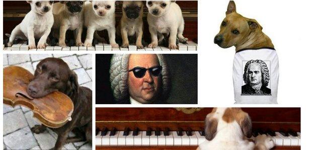 Bach dog gifs