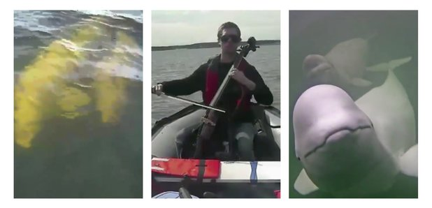 Cellist plays to whales