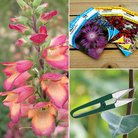 CFM Gardening Foxglove, Snips, Seeds