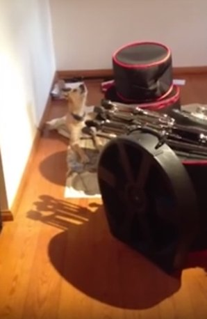 dog duets with saxophone